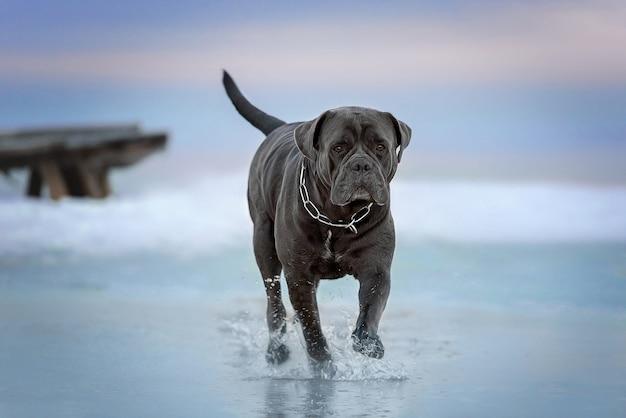 Il cane corre lungo la riva