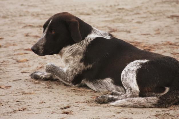 Cane seduto sulla spiaggia in attesa di qualcosa.