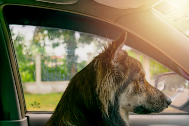 Cane seduto sulla macchina.