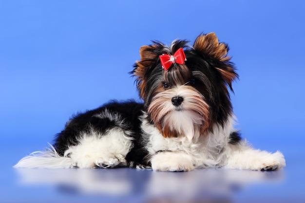 Dog sitter Foto Premium