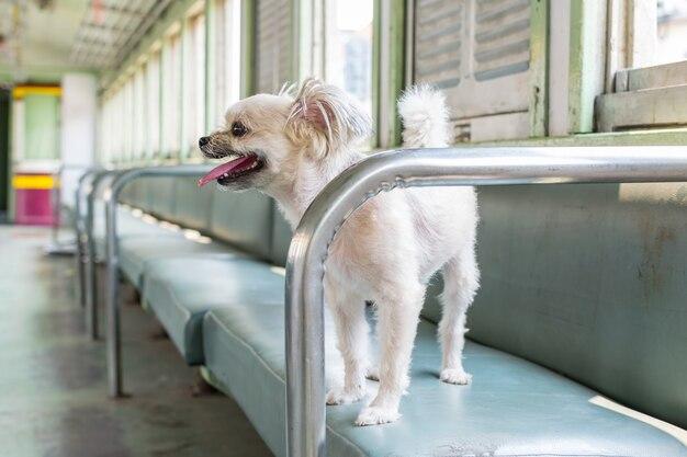 Cane di razza mista di colore beige così carino sul sedile dell'auto all'interno di una ferrovia