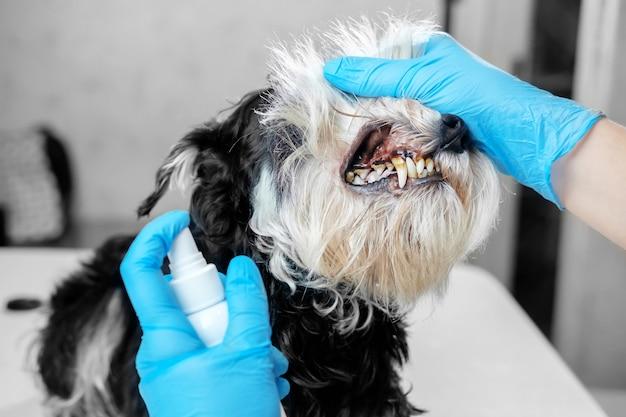 Tartaro di cane, malattia dentale in un cane