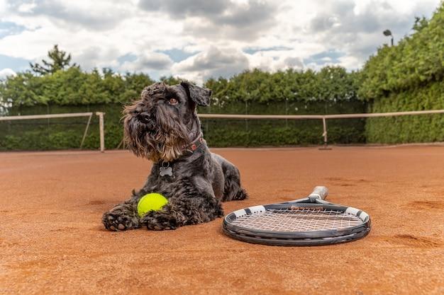 Cane su un campo da tennis con palla e racchetta