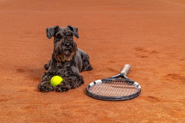 Cane su un campo da tennis con palline e racchette