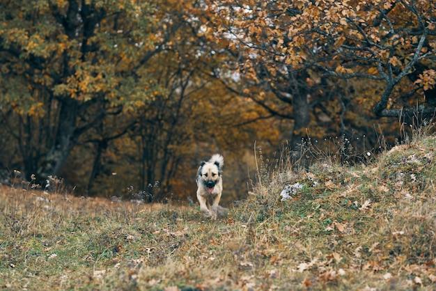 Cane che cammina nella natura tra gli alberi della foresta viaggia amicizia