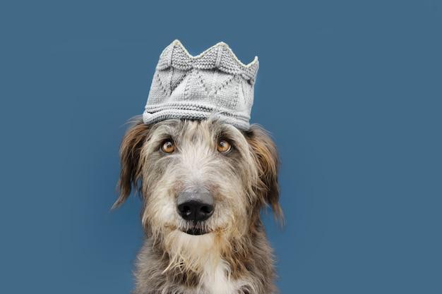 Cane che indossa una corona per il carnevale. isolato sulla superficie blu.