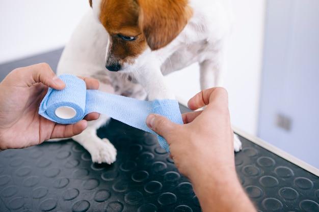Cane con una gamba rotta sulla clinica veterinaria