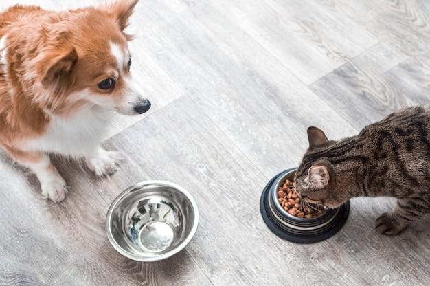 Un cane con una ciotola vuota sembra un gatto che mangia cibo secco.
