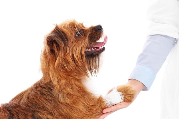 Un cane con la zampa ferita che ringrazia il veterinario