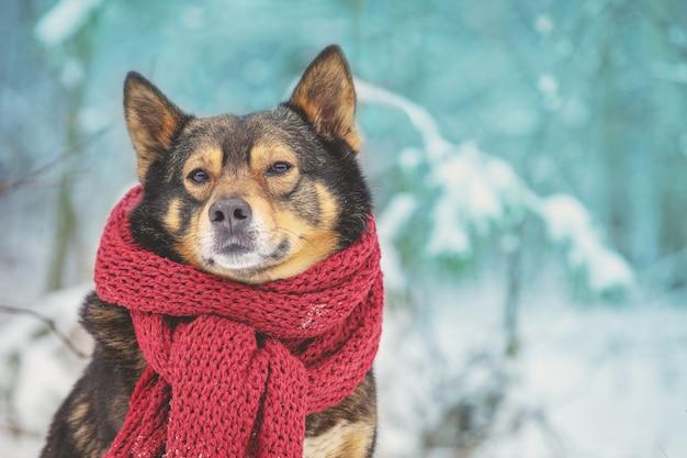 Un cane con una sciarpa lavorata a maglia intorno al collo siede sullo sfondo di una foresta invernale
