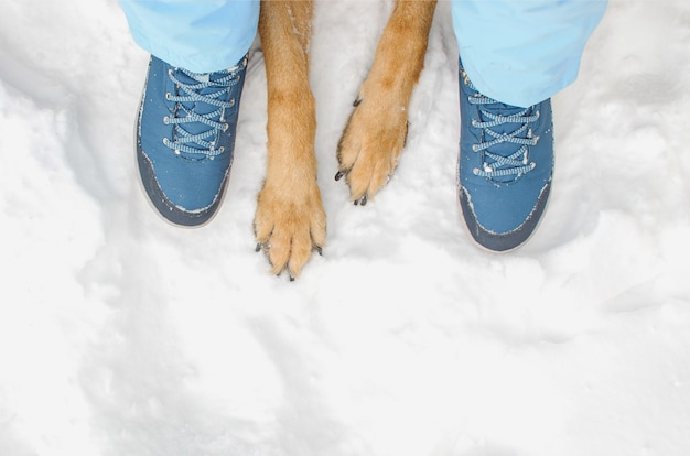 Cane con il proprietario durante la passeggiata invernale. zampe di cane vista dall'alto e piedi umani sulla neve. cura degli animali. l'inverno cammina all'aperto.