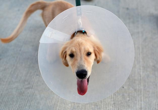 Cane con un collare protettivo in plastica con cappuccio con telecamera per strada