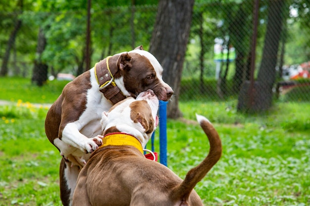 Lotta di cani che gioca sull'erba del parco