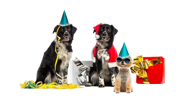 Cani che indossano cappelli da festa