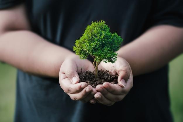 Fare csr piantando alberi, concetto di csr e piantando alberelli di alberi.