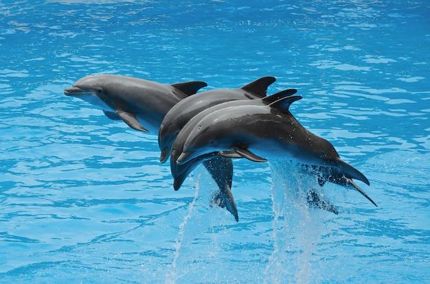 Delfini che giocano in piscina