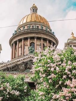 Cupola della cattedrale di sant'isacco sotto un ramo di fiori lilla a san pietroburgo