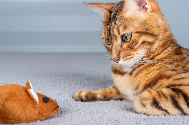 Un gatto domestico del bengala guarda intensamente un topo marrone giocattolo.