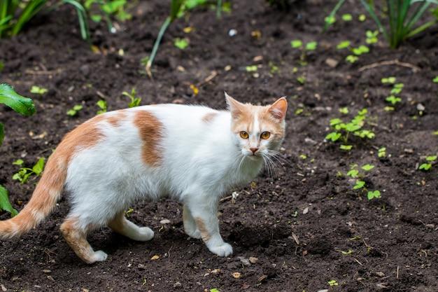 Gatto domestico in giardino