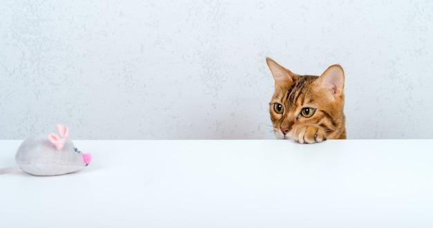 Il gatto domestico caccia un topo grigio giocattolo su un tavolo bianco