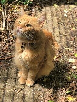 Gatto domestico che gioca in casa al sole