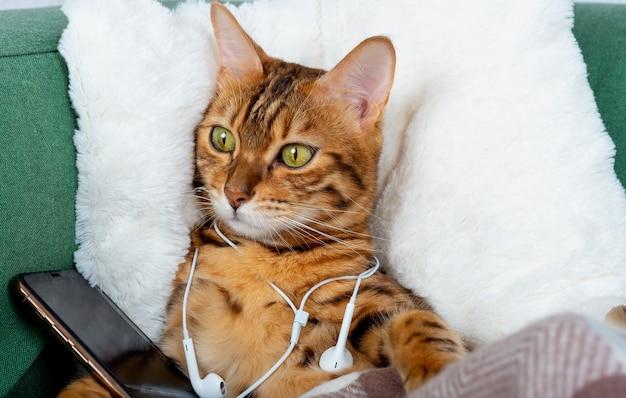 Il gatto domestico con un telefono e le cuffie sta riposando su un cuscino morbido nel soggiorno