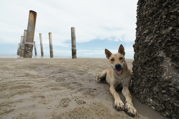 Cane domestico rilassante e riposante sulla spiaggia di sabbia