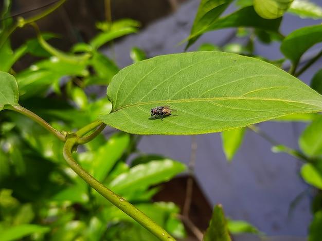 Una mosca domestica è seduta sopra una foto del primo piano di una foglia verde