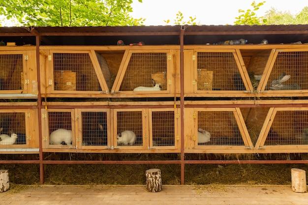 Conigli domestici in gabbia. contenuto, allevamento in cattività.