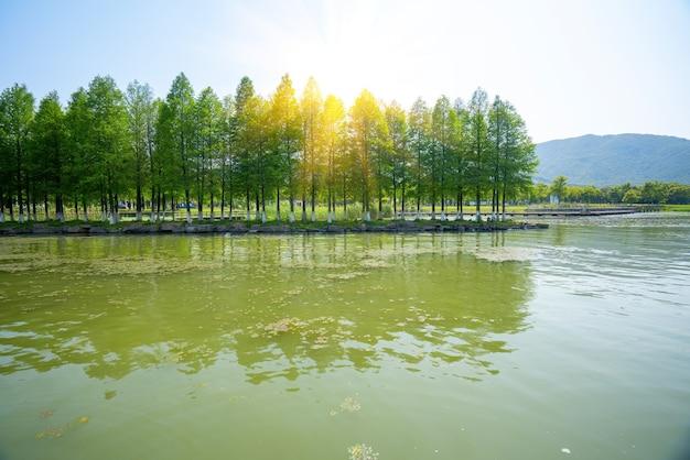 Parco delle zone umide del lago dongqian, ningbo, cina