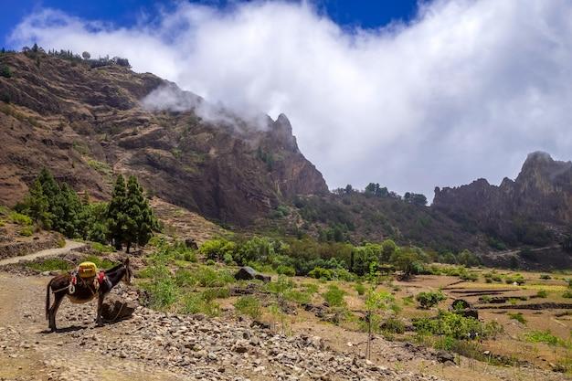 Asino nel cratere votano della cova de paul nell'isola di santo antao, capo verde