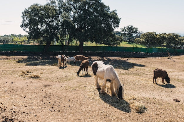 Asini, cavalli e altri animali da fattoria in un recinto