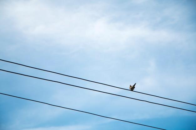 Una colomba sul filo con cielo blu