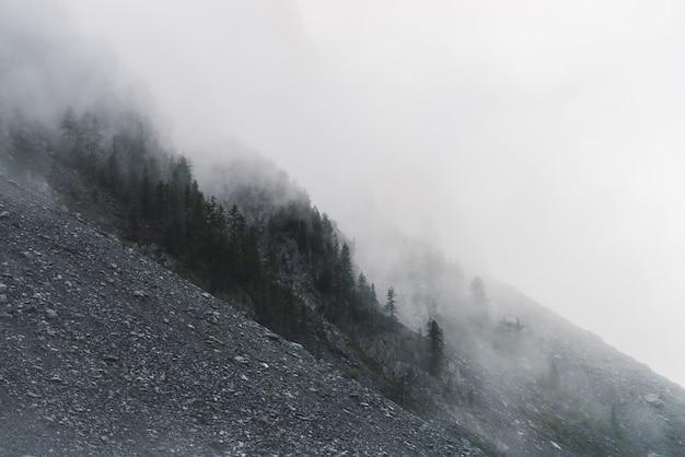 Drammatica tetra nebbia densa tra grandi montagne rocciose con alberi di conifere