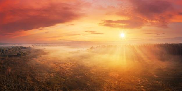 Drammatica mattina nebbiosa nella foresta all'alba