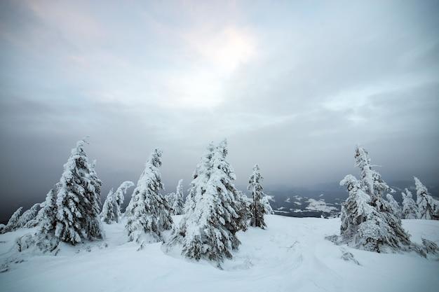 Drammatico paesaggio invernale con foresta di abeti rannicchiata con la neve bianca nelle fredde montagne ghiacciate.