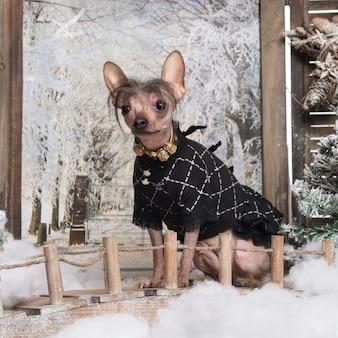 Cane crestato cinese vestito in uno scenario invernale