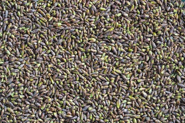 Sfondo di germogli di betulla essiccati, primo piano, vista dall'alto. utilizzato in erboristeria come decotto per varie malattie