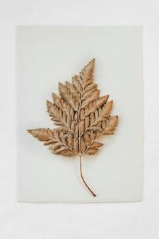 Foglia marrone secca su carta bianca