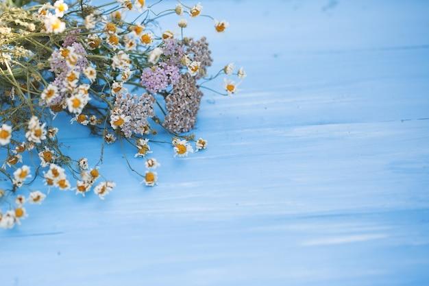Fiori secchi di camomilla su legno blu