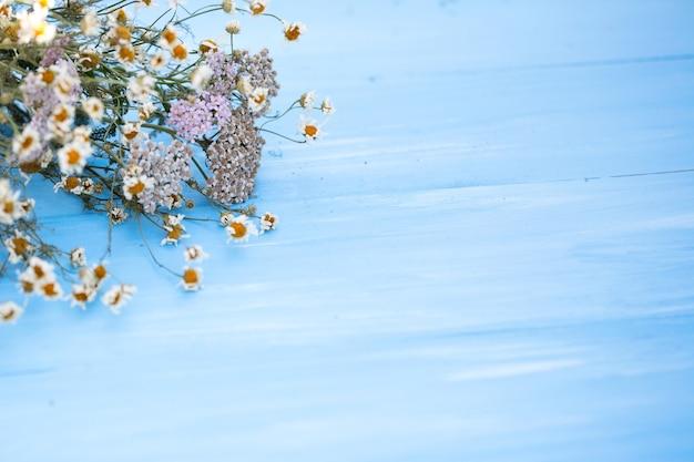 Fiori di camomilla secchi su fondo di legno blu