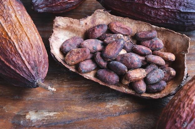 Fave di cacao secche e fave di cacao secche