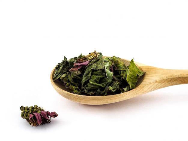 Le foglie ed i fiori secchi dell'echinacea si trovano in un cucchiaio di legno su un bianco