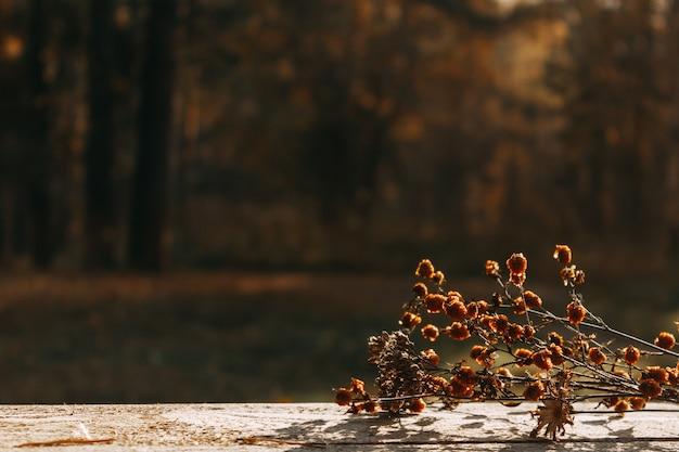 I fiori secchi sono distesi sul tavolo sullo sfondo di una foresta autunnale. messa a fuoco selettiva. il concetto di un autunno caldo.