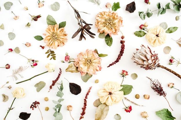 Sfondo fiori secchi: peonia beige, protea, rami di eucalipto, rose su sfondo bianco. disposizione piana, vista dall'alto. motivo floreale