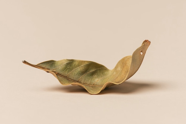 Foglia verde essiccata su fondo beige