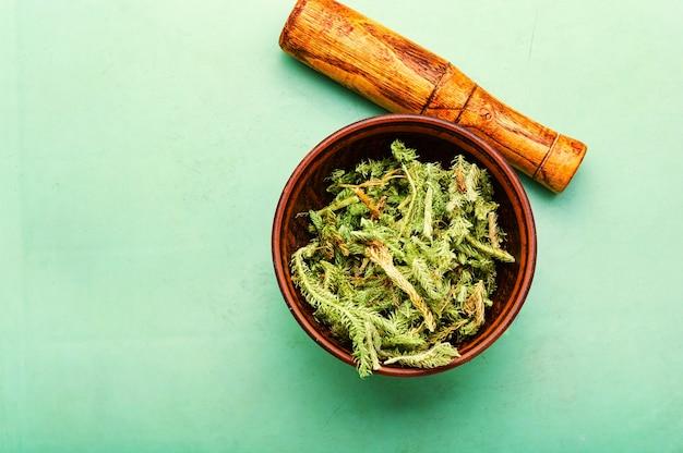 Piante curative essiccate in un mortaio e pestello.lycopodium in erboristeria.copia spazio