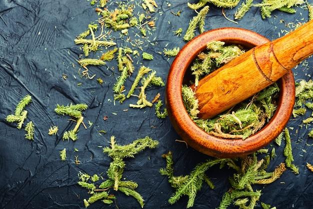Piante curative essiccate in un mortaio e pestello.lycopodium in erboristeria