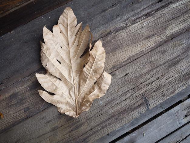Foglia secca sul vecchio pavimento in legno