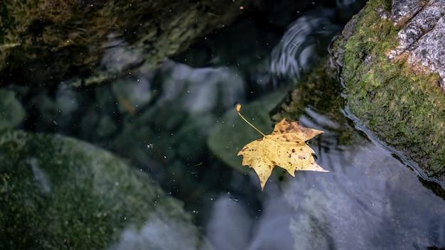 Foglia secca sull'acqua